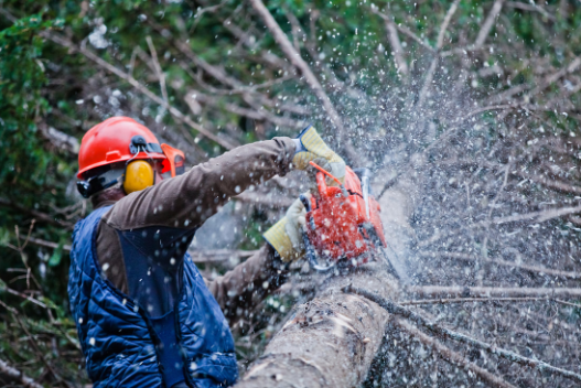 tree removal plainfield il, tree removal service plainfield il, tree service plainfield, il, Joliet Tree Service Specialists