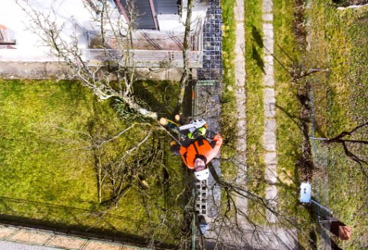 tree removal service plainfield il, tree removal plainfield il, tree service plainfield, il, Joliet Tree Service Specialists